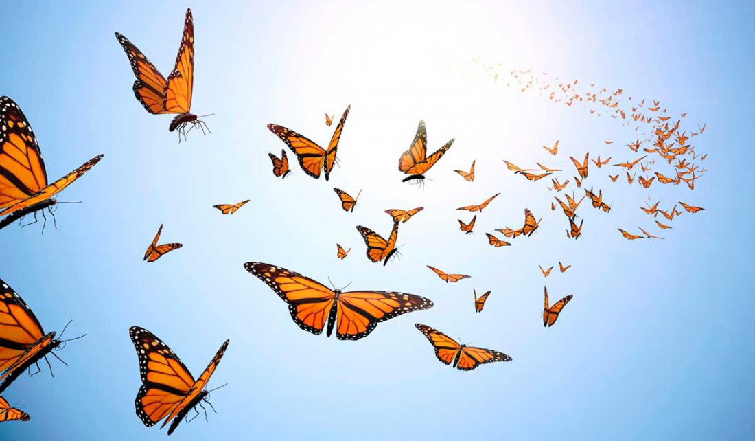 Летающая бабочка открытка видео