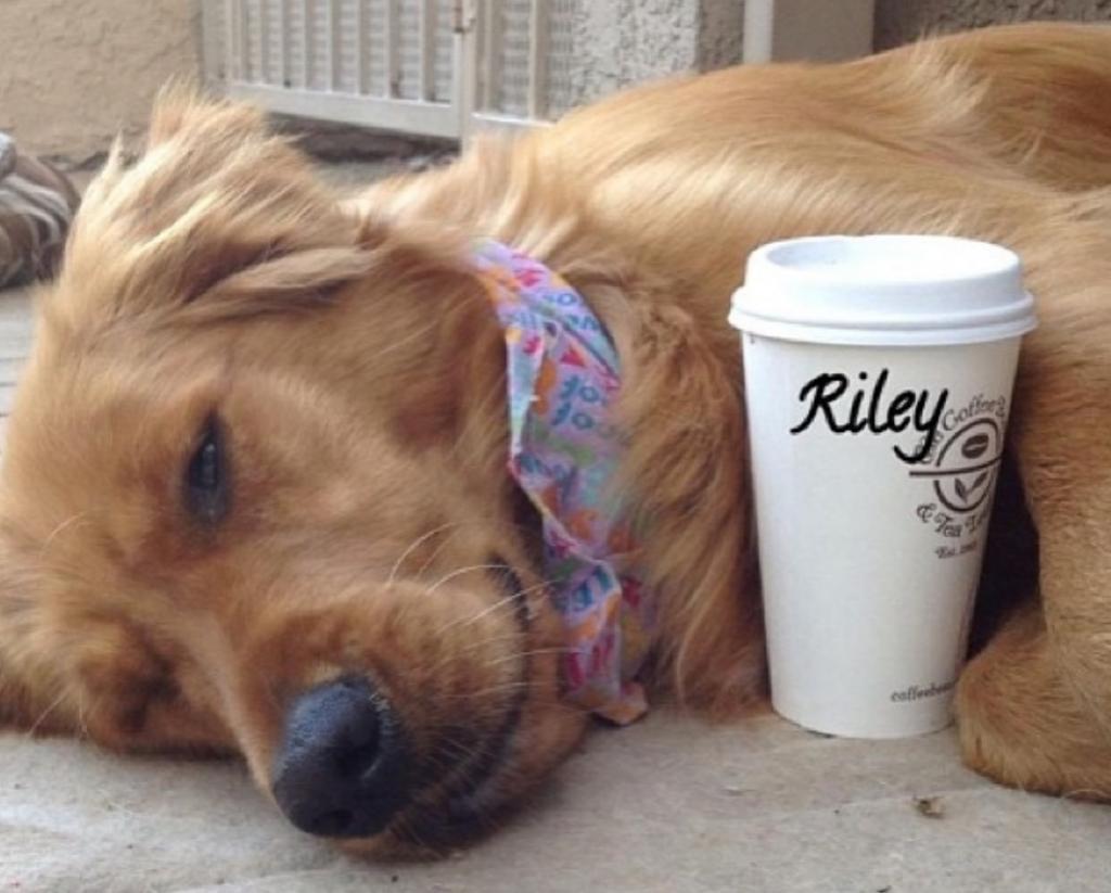 Пес по имени Райли стал знаменитым блогером: он манипулировал прохожими, призывая их поиграть