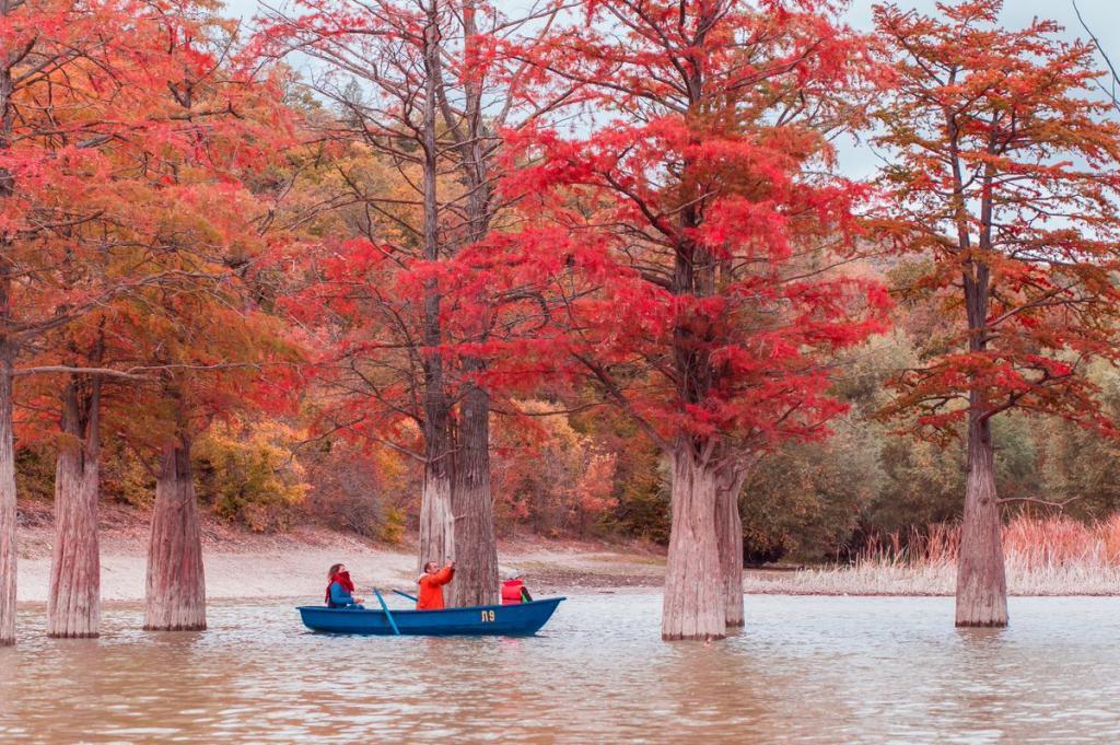 Спасти болотный кипарис: в Анапе к уникальному Кипарисовому озеру ограничили доступ туристов