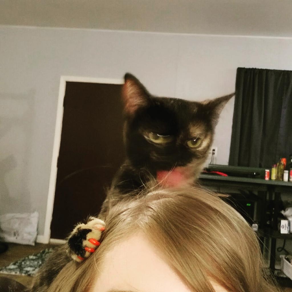 На свое место ставит: почему коты лижут волосы своих хозяев