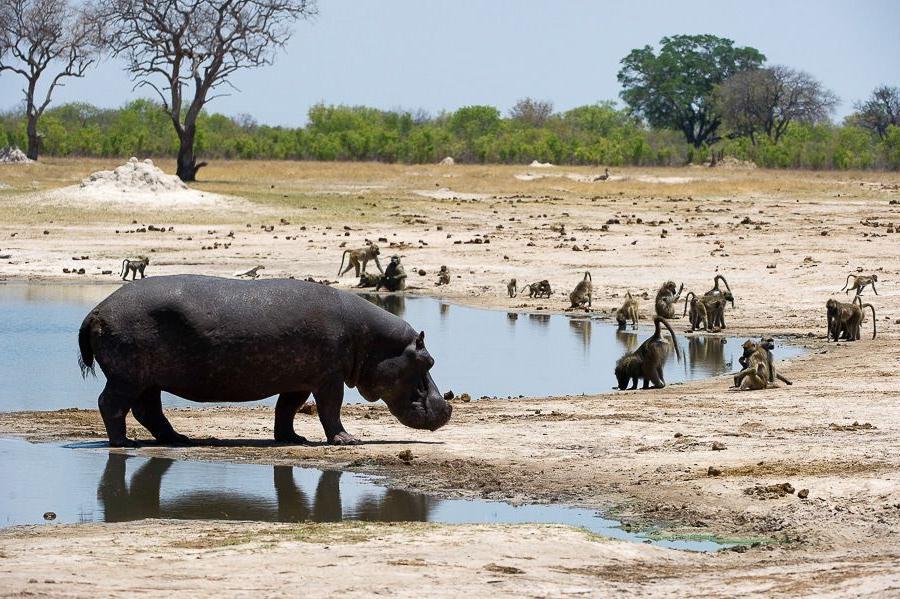 Защитники природы празднуют победу: в Зимбабве запретили добычу угля и золота в национальных парках