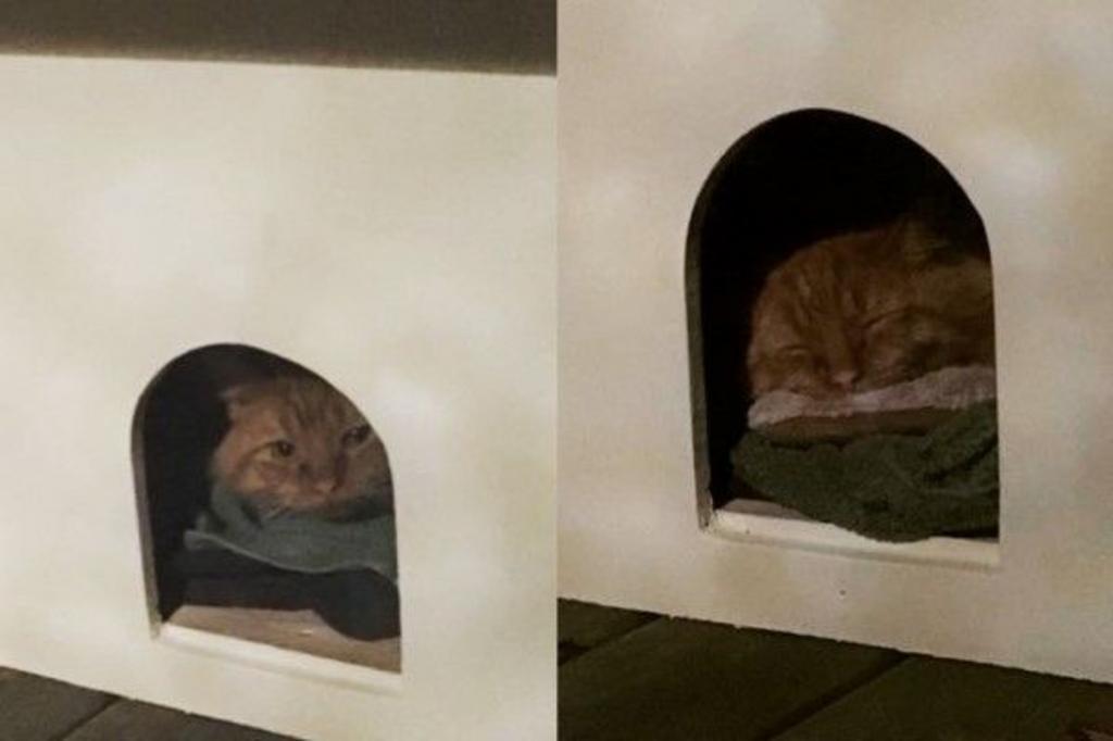 Уличный кот очень боялся людей. Мужчина потратил целый год, чтобы вызвать его доверие. Теперь усатый — член его семьи