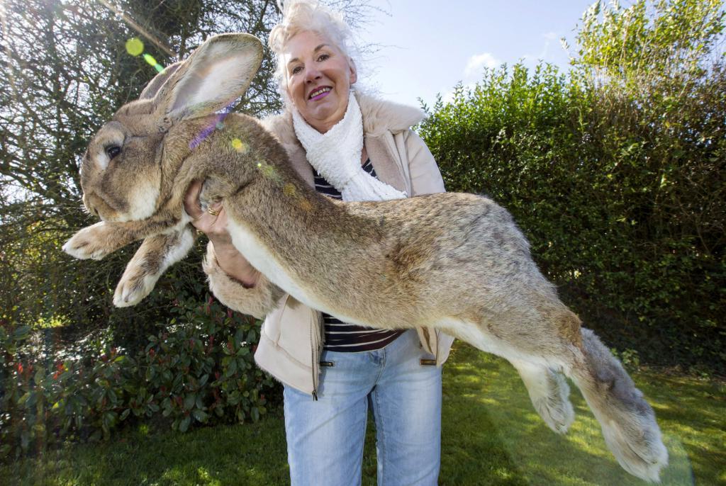 Вызов природе: животные, которые выделяются среди своих сородичей необычным внешним видом (фото)