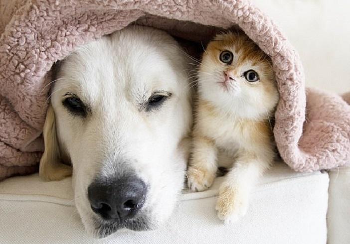 У этого котенка есть серьезный друг, который любит проводить с ним время: видео