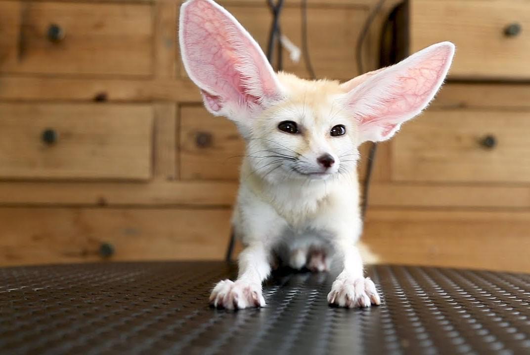 экзотические животные для дома фото с названиями необходимо выбрать