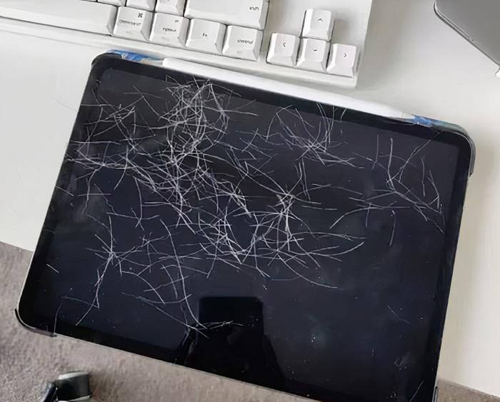 Студентка Мэйли оставила iPad дома без присмотра. Когда вернулась, обнаружила на нем десятки новых селфи: их сделал котенок (фото)