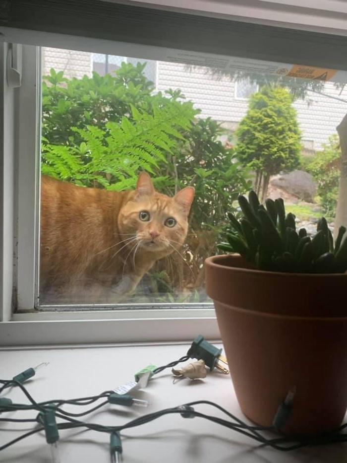 Люди делятся снимками своих неожиданных встреч с кошками: 7 смешных фото