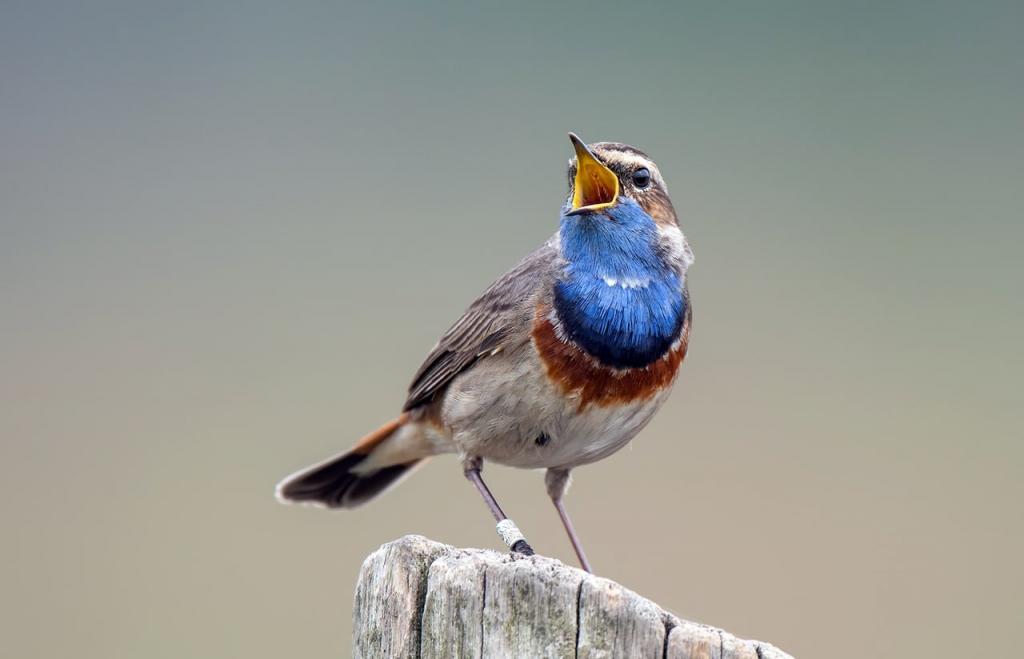 Без генетического исследования: тюменские ученые научились определять пол и возраст птиц по размеру плечевой кости