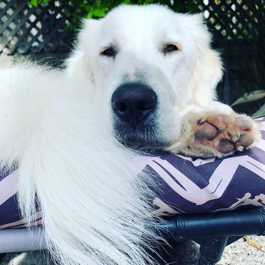 Собака по кличке Фиона обожает сусликов и здоровается с ними каждую прогулку: одно из самых милых видео, что я смотрел