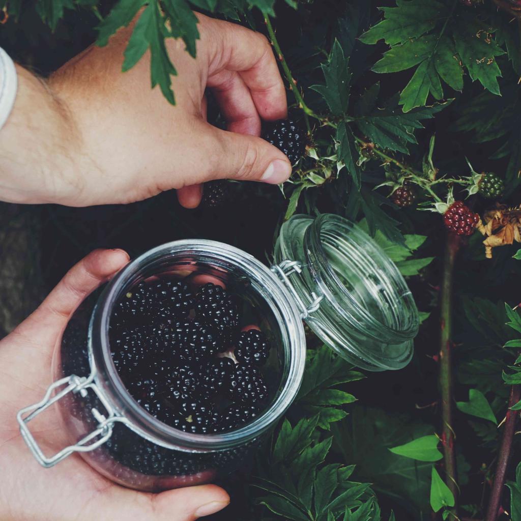 Две столовые ложки семян чиа содержат 10 граммов клетчатки. Продукты, богатые клетчаткой: рекомендации диетологов