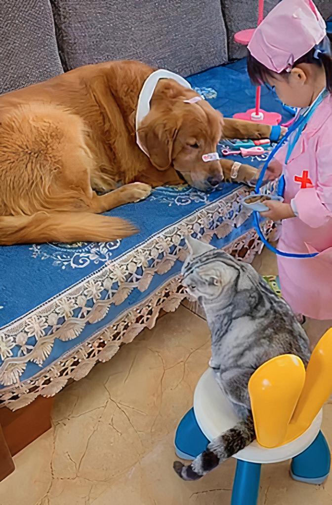 Люди тают от того, как 3-летняя девочка спит со своими кошкой и собакой: трогательное видео