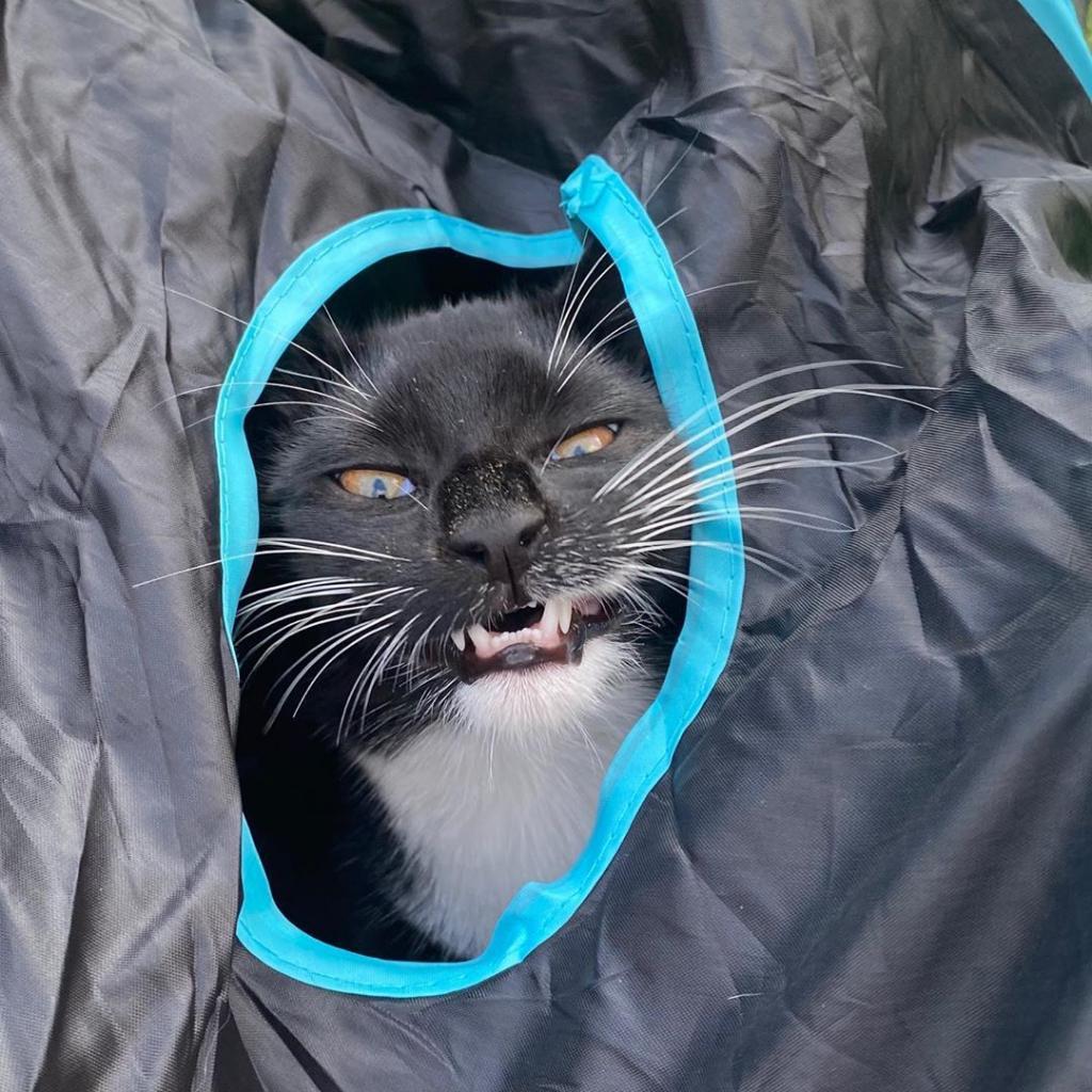 У кого интересней:новый кошачий тренд набирает оборотыв соцсетях