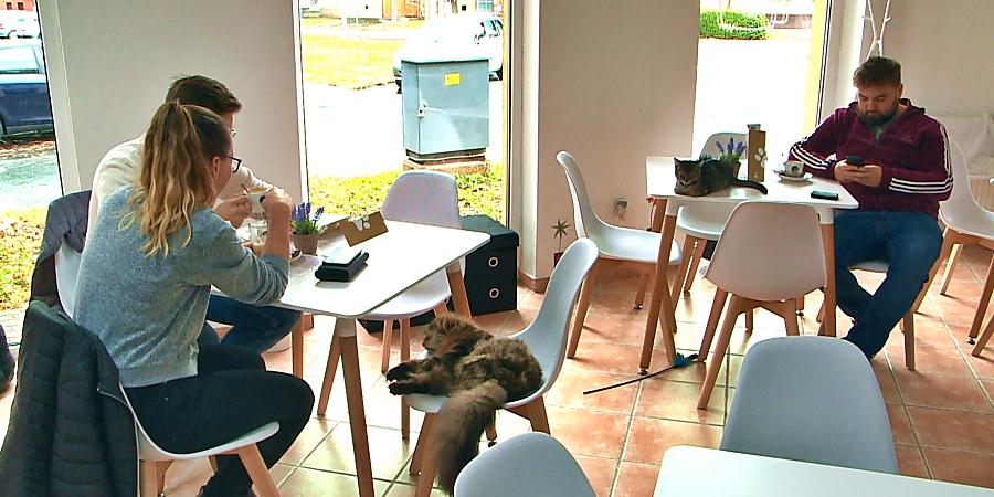 В венгерском кафе к кофе и печенью прилагаются кошки: психологи считают, что это снимает стресс и тревогу у посетителей (фото)