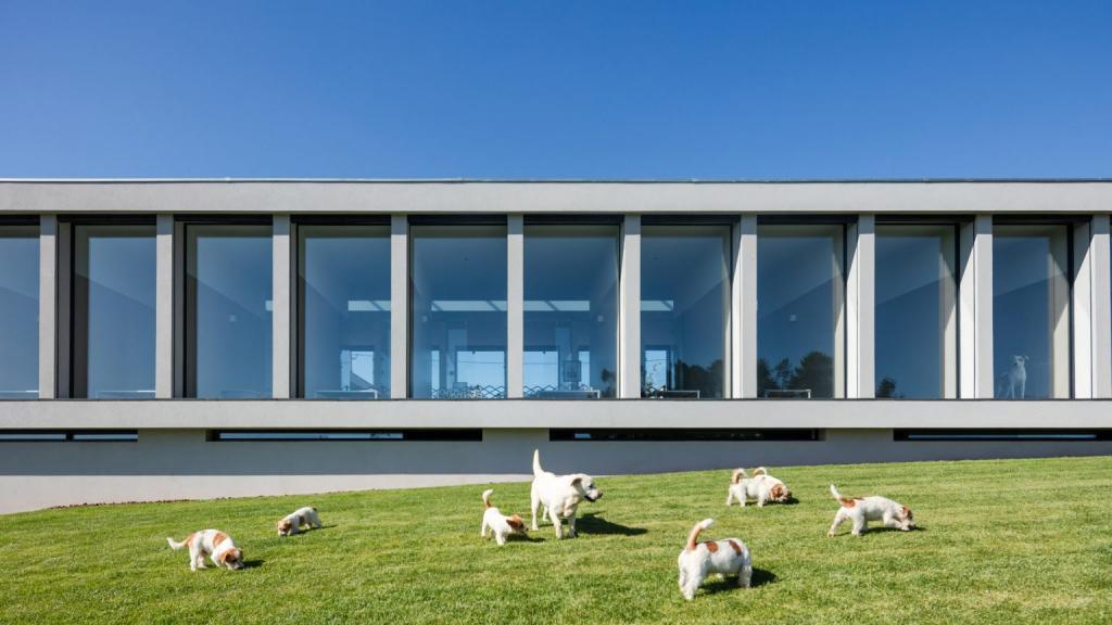 На старом винограднике в Португалии открыли отель для кошек и собак: такой роскошный вид из окна есть не во всех 5-звездочных гостиницах