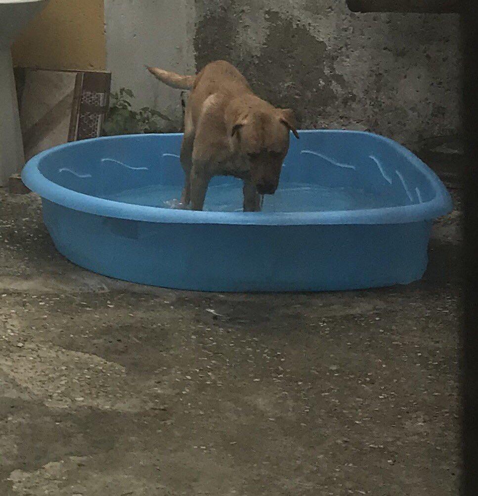 «Я не хочу, чтобы в нашем доме жила собака!»: фотографии строгих отцов, которые неожиданно для всех стали заботливыми хозяевами питомцев