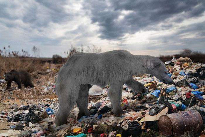 Исследователь Стив Бэкшолл показал, как могут выглядеть животные через 100 лет из-за климатической катастрофы
