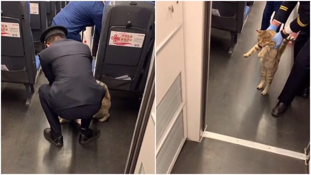 """Полосатый """"заяц"""": неизвестного кота сняли с поезда в Китае за проезд без билета (видео)"""