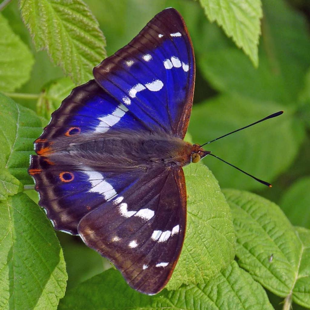 В некогда бесплодном английском поместье теперь живут все виды животных и птиц, населяющих Британию, как в заповедном Эдеме