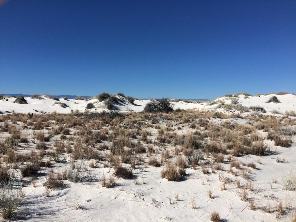Самую длинную цепь следов доисторического человека обнаружили американские археологи (фото)