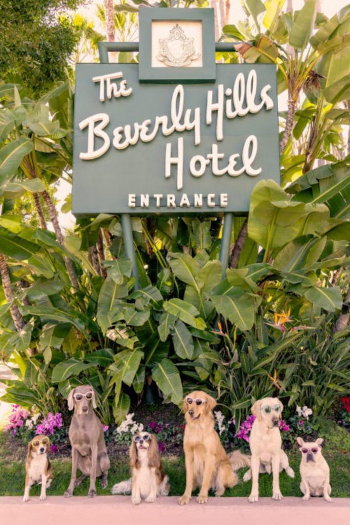 """На фото Грэя Малина постояльцами роскошного отеля """"Беверли Хиллз"""" стали собаки"""
