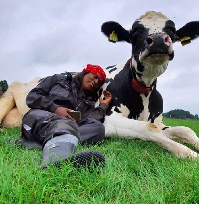 Их часто называют большими собаками: Сюзанна из Нью-Йорка приглашает людей обняться с коровами, чтобы снять стресс и почувствовать себя счастливее