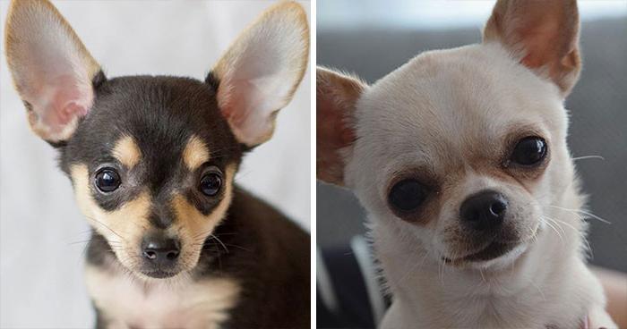 10 пород собак, которые часто путают друг с другом: рассказываем про отличия