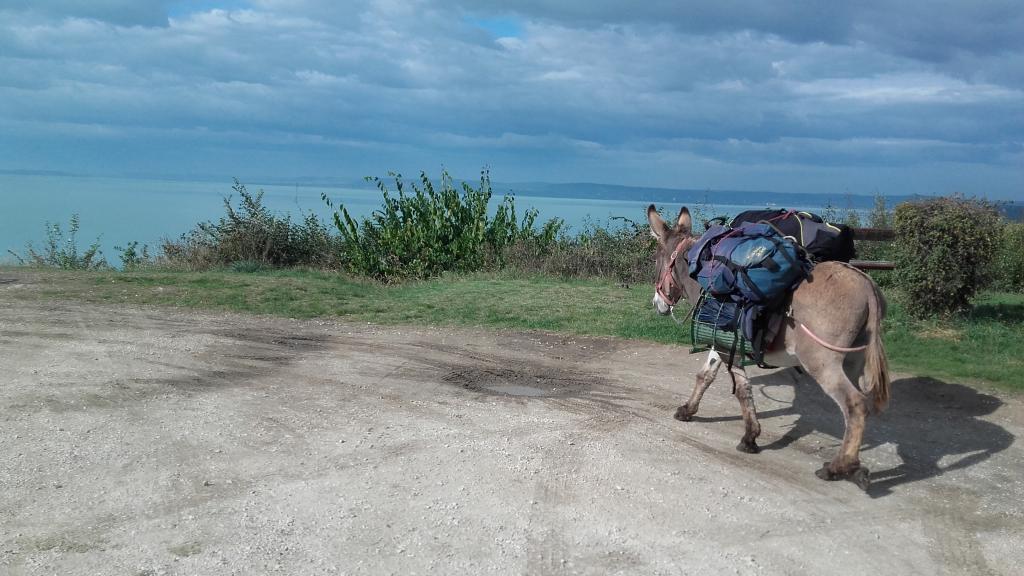Мужчина путешествует по разным странам верхом на верном ослике: за 7 лет они объехали пол-Европы (фото)