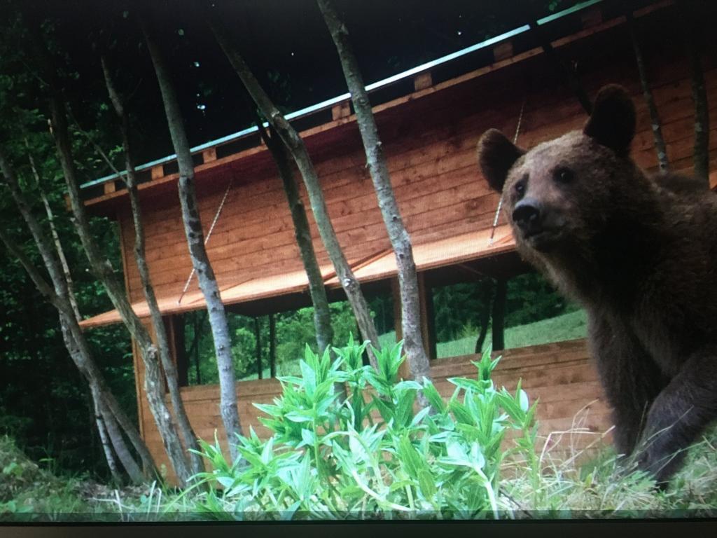 Раньше Янош был миллиардером: теперь живет в горах и присматривает за медведями