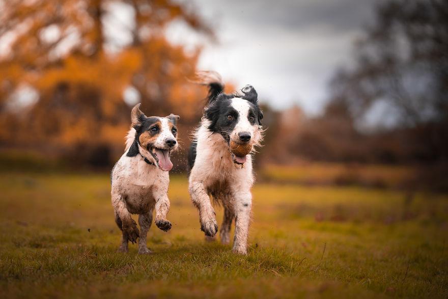 Портретный фотограф Золтан проводит осенние фотосессии собак: в результате получается даже милее, чем он планировал (фото)