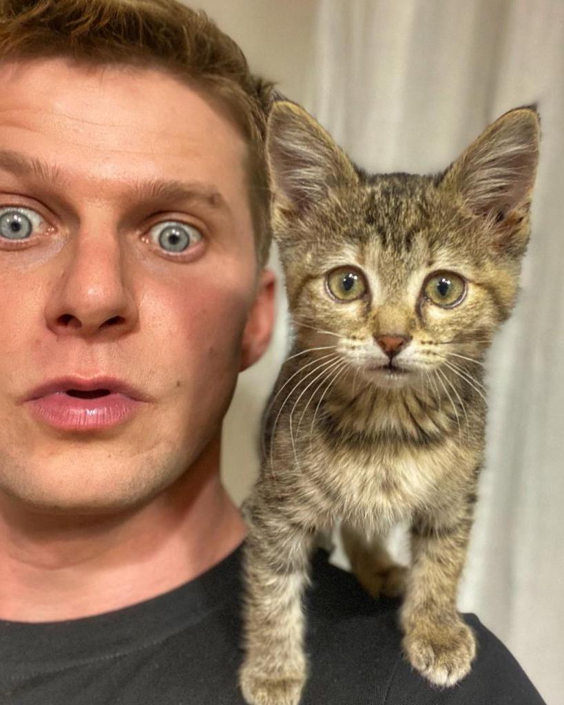 """""""Как они меня находят?"""" Роман Курцын показал нового котенка Тосю, которого приютил у себя"""