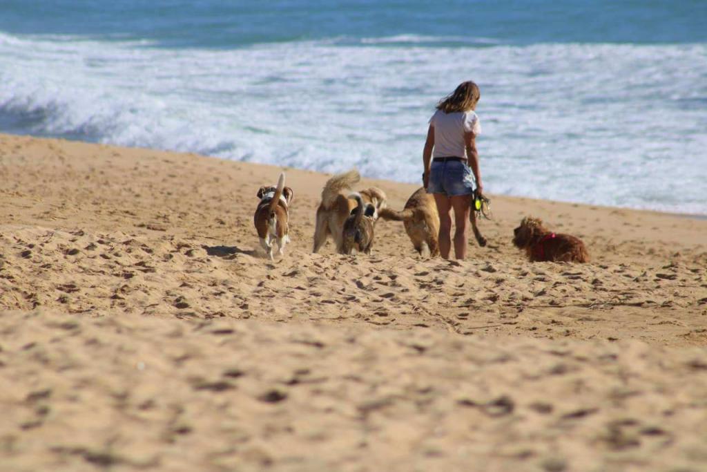 С животными нельзя и другие ограничения: в России вступают новые запреты на использование пляжей