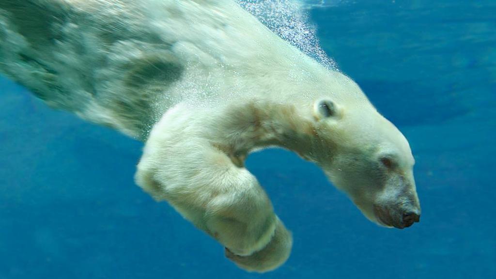 Вечная химия: PFAS не разлагаются в океанах и в конечном итоге попадают в наш организм через рыбу и морепродукты