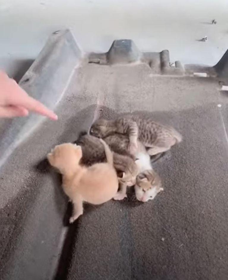 Как они туда попали? На СТО разобрали дно машины, а внутри – четыре котенка (видео)