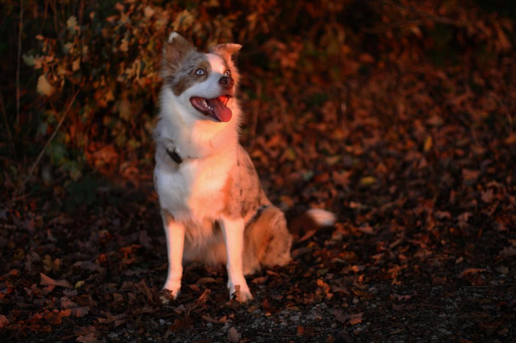 Мамонты ушли, а они остались: британские ученые исследовали ДНК собак и узнали, что они произошли от псовых Ледникового периода