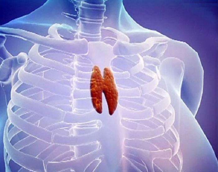 Здоровая вилочковая железа - залог молодости и долголетия: чем питаться, чтобы этот орган долгие годы не угасал (почти у всех она медленно увядает уже после 15 лет)