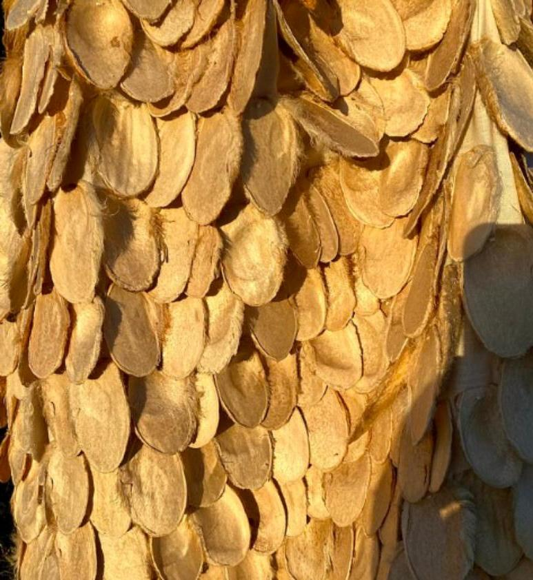 18-летняя девушка из Австралии сделала себе нарядное платье из шелухи манговых косточек: фото