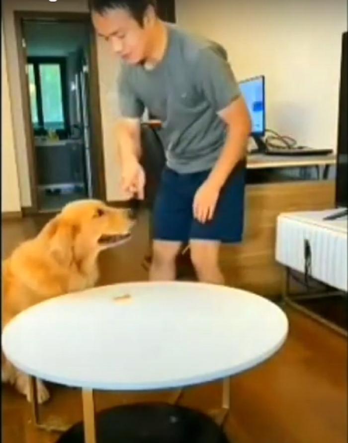 Хозяин приказал собаке не есть лакомство и вышел, оставив скрытую камеру: пес решил схитрить (видео)