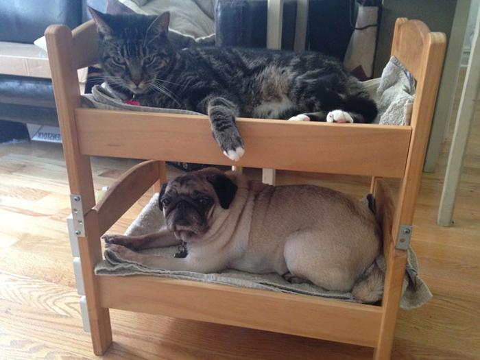 Построила для своих питомцев двухъярусную лежанку: снизу спит собака, а сверху - кот