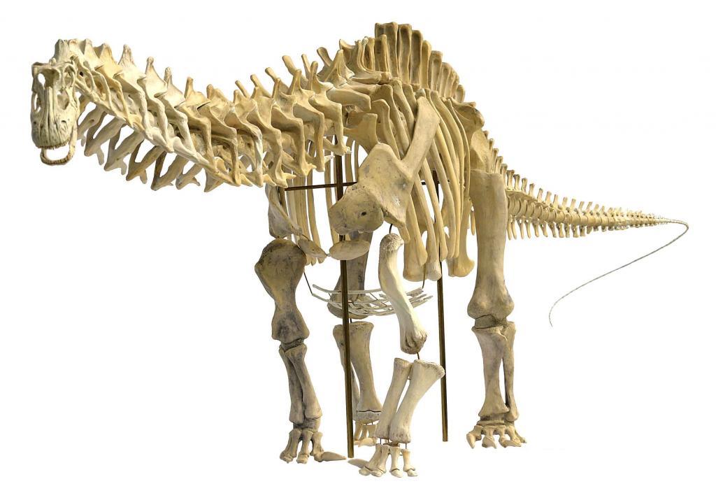 Палеонтологи впервые обнаружили окаменевших паразитов в костях динозавра. И это может помочь современной медицине