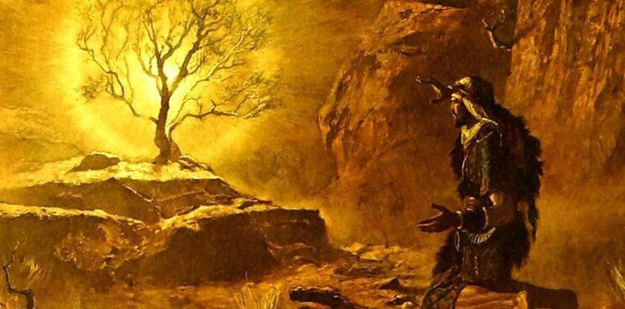 Ладан, кедровое дерево, мирра: 12 эфирных масел из Библии, использование которых завещано самим Богом