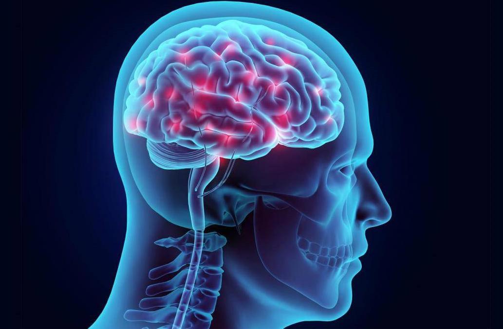 саймон мозг центры картинки интересующие