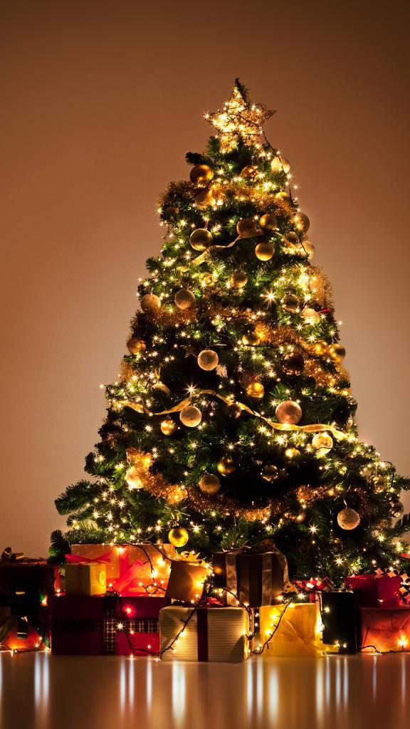 Британские эксперты рассказали, как дольше сохранить новогоднюю елку: поможет популярный напиток