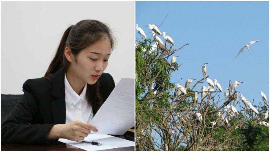 «Как поймать сто птиц, сидящих на дереве?»: ответ соискателя на вакансию очень понравился работодателю