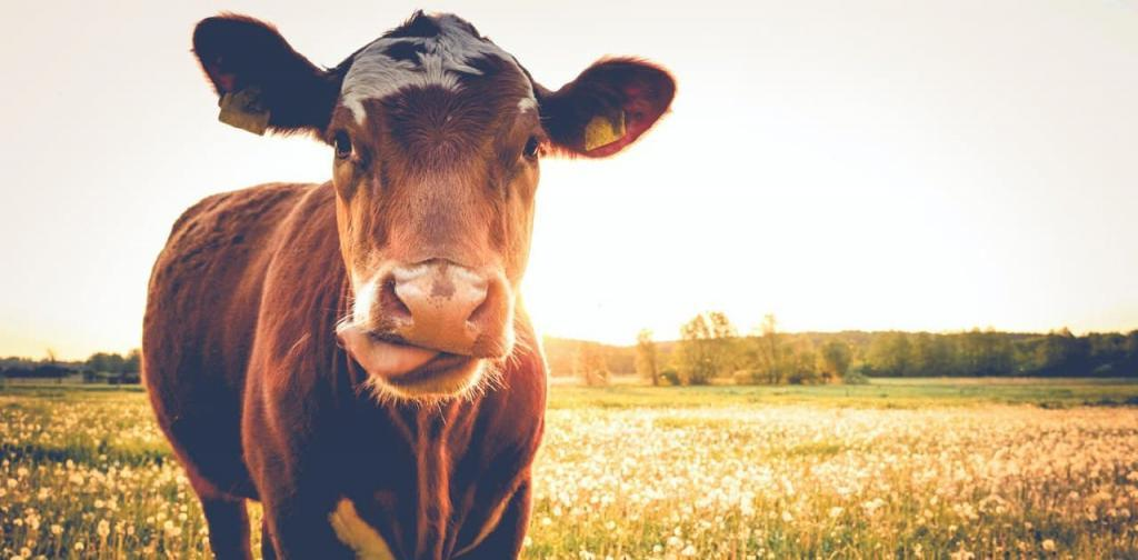Мясо уже выращивают в лаборатории: хорошие ли это новости для животных и нашего будущего