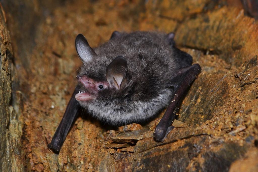 Учёные провели исследование по поиску коронавируса у летучих мышей Сибири