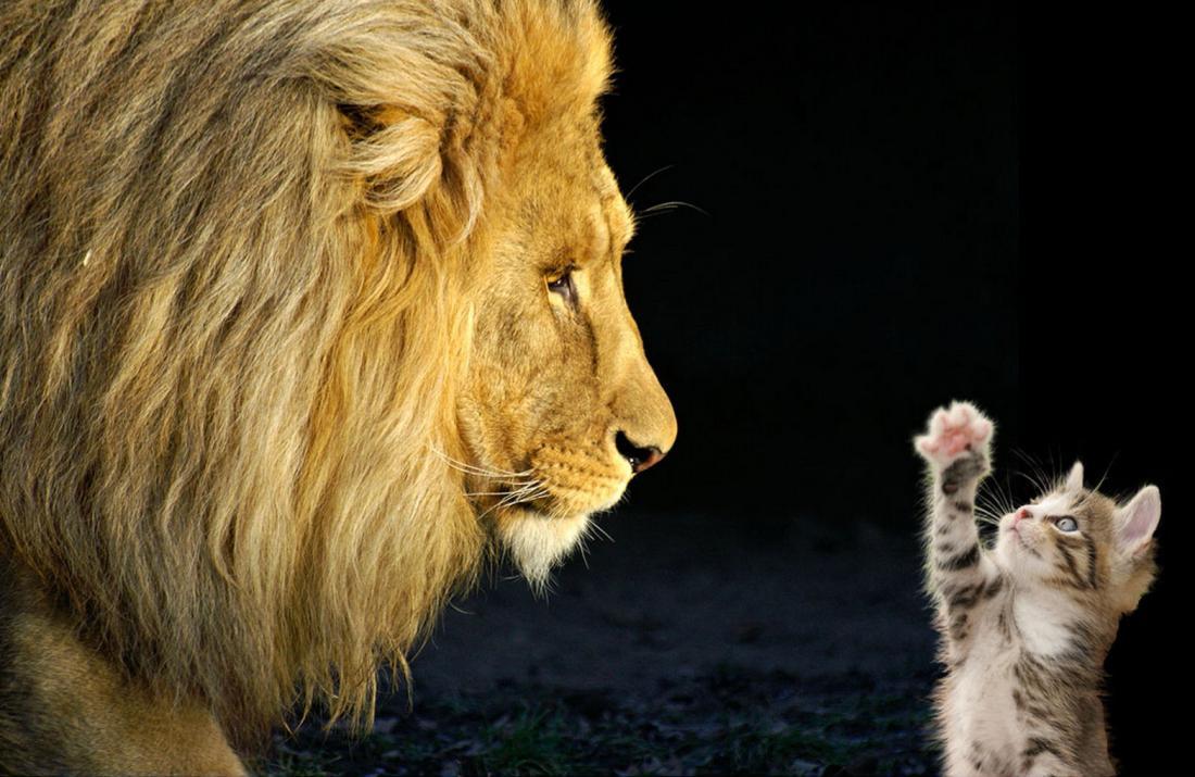 утверждал, что если львы обижаются то чел нравится открытка тексте присутствует