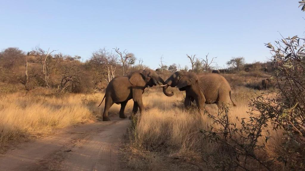 Нейросеть помогла ученым подсчитать слонов в одном из заповедников ЮАР: ее вычисления оказались точнее