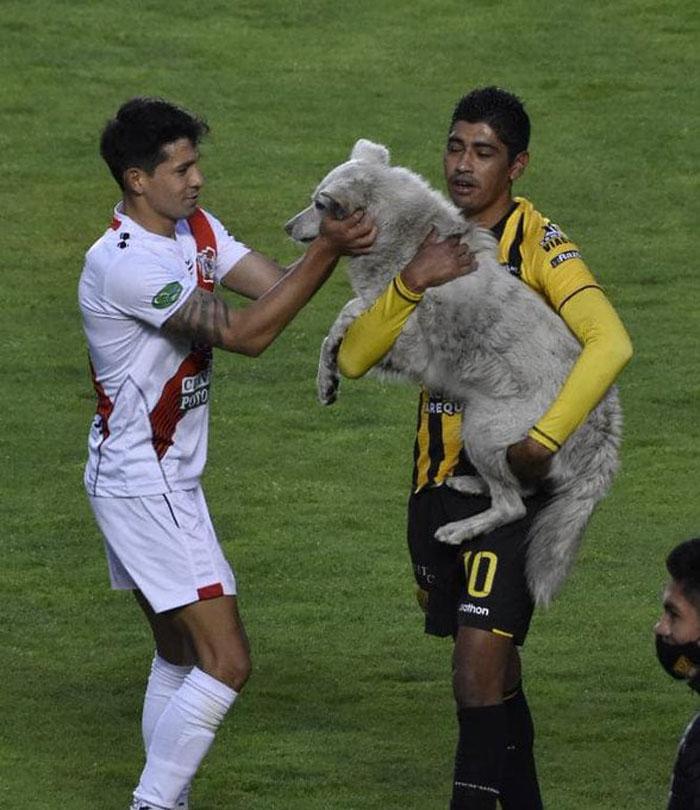 Собаку, сорвавшую матч по футболу в Боливии, один из игроков забрал себе домой