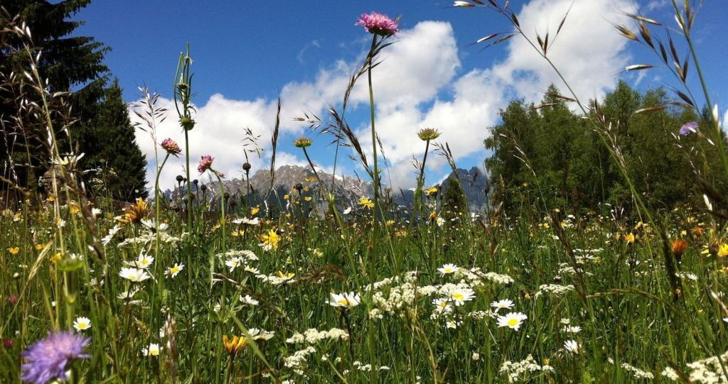 Альпийские сенные купания: фермеры Швейцарии веками спали в горной траве, чтобы оздоровиться