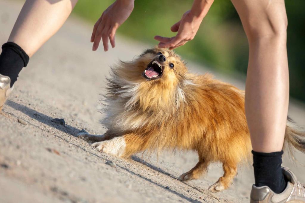 Любой собаке нужен поводок, или Почему некоторые четвероногие сходят с ума при виде других собак